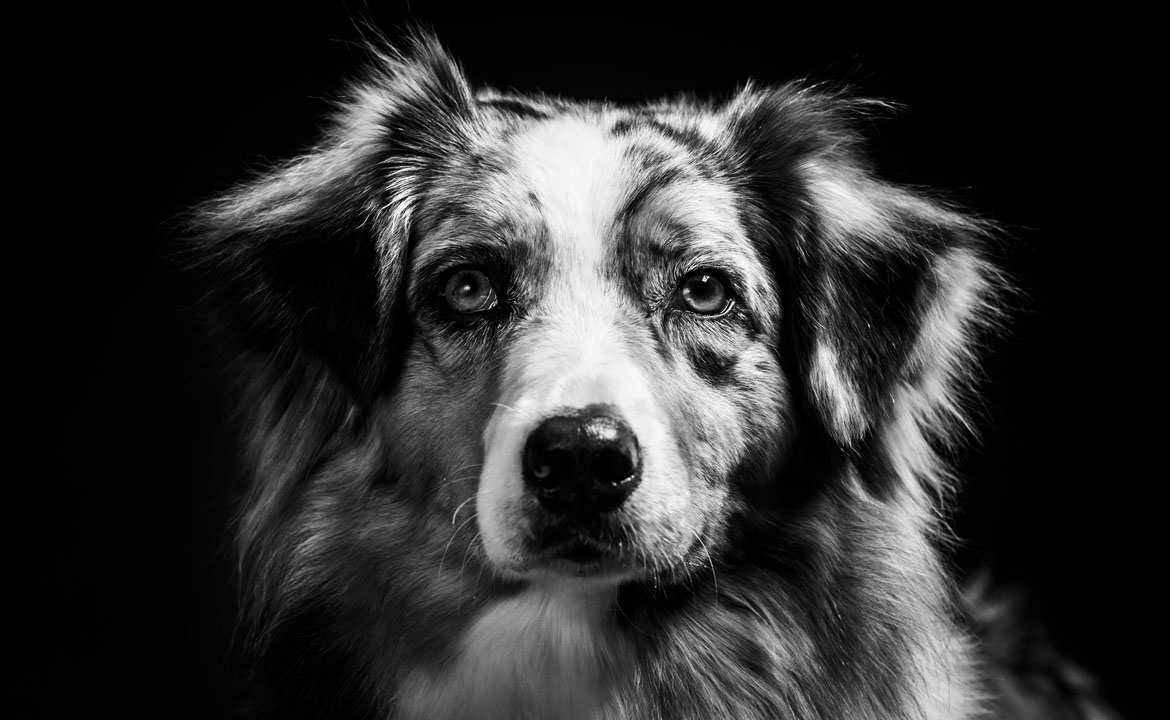photos de chien studio bordeaux par le photographe antoine demoinet