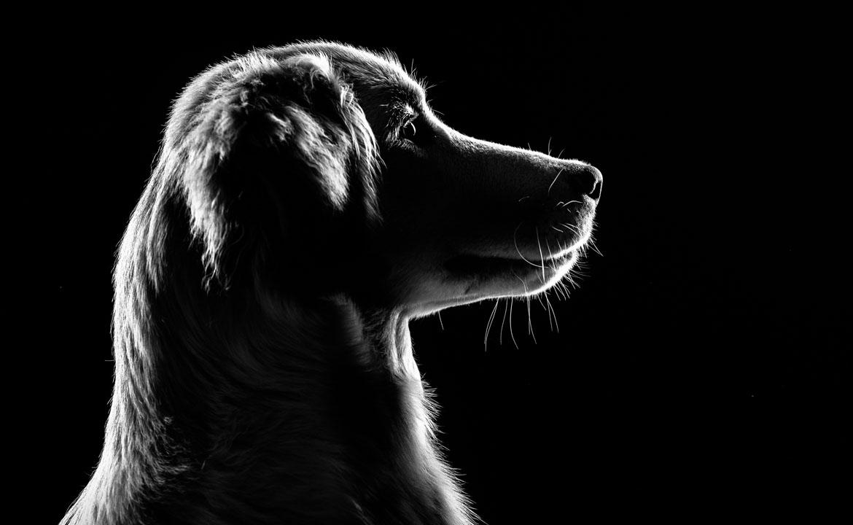 photographe chien bordeaux